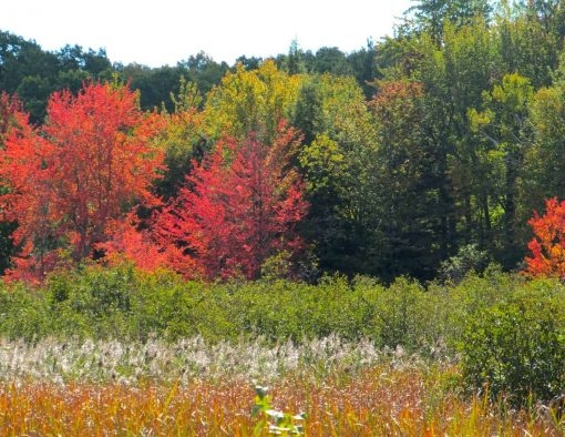 104-Layers of Autumn Michigan