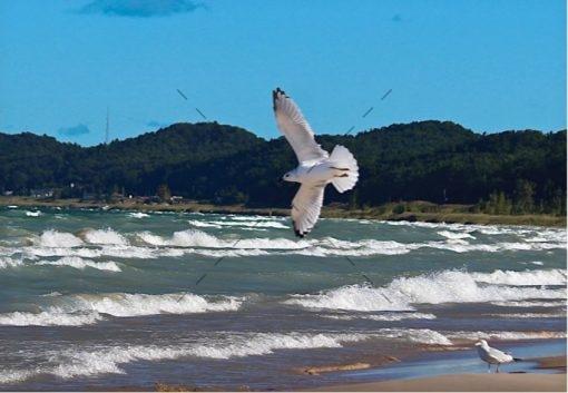 gull-air-show