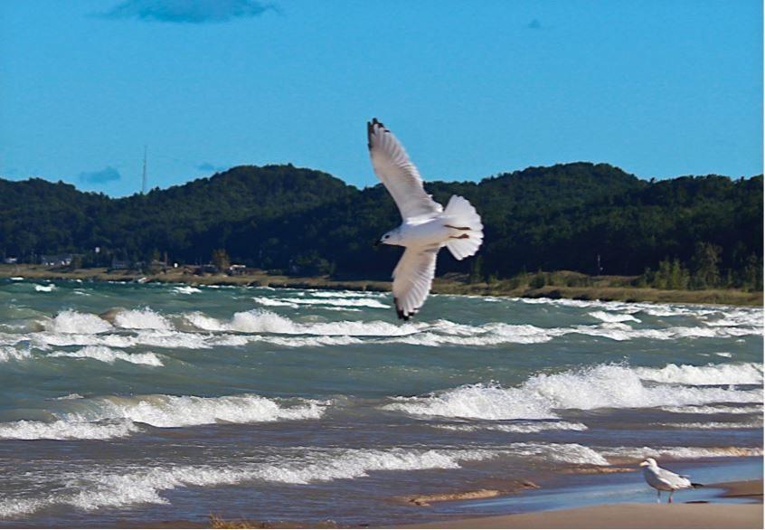 Gull's  Air  Show